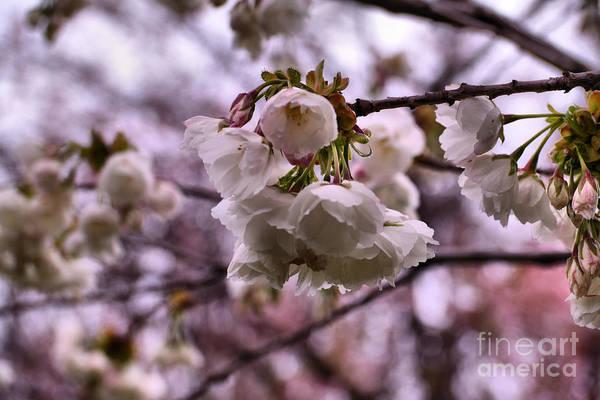 Wall Art - Photograph - Spring Awakens by Jeff Swan