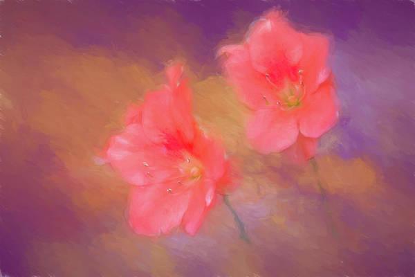 Wall Art - Photograph - Spring Azalea by Ches Black