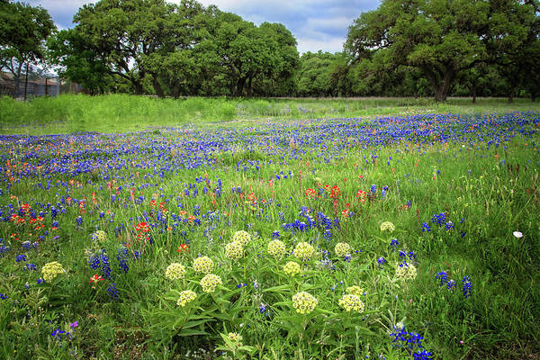 Photograph - Spring Beauty In Boerne by Lynn Bauer