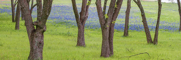 Photograph - Spring Bloom Along The Ennis Bluebonnet Trail - Spring Texas Panorama by Gregory Ballos
