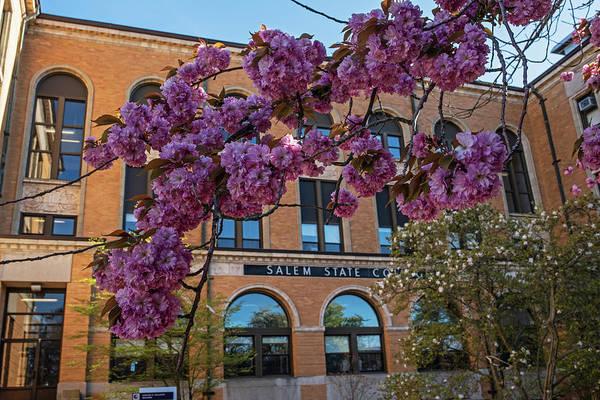 Photograph - Spring Bloom At Salem State University Salem Ma by Toby McGuire