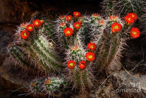 Photograph - Spring Bloom by Scott Kemper