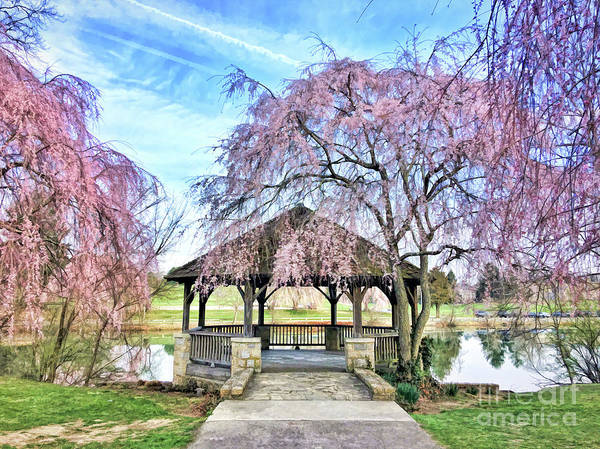 Photograph - Spring Blooms At The Duck Pond by Kerri Farley