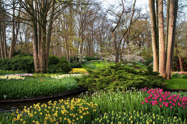 Photograph - Spring Blooms In Keukenhof by Jenny Rainbow