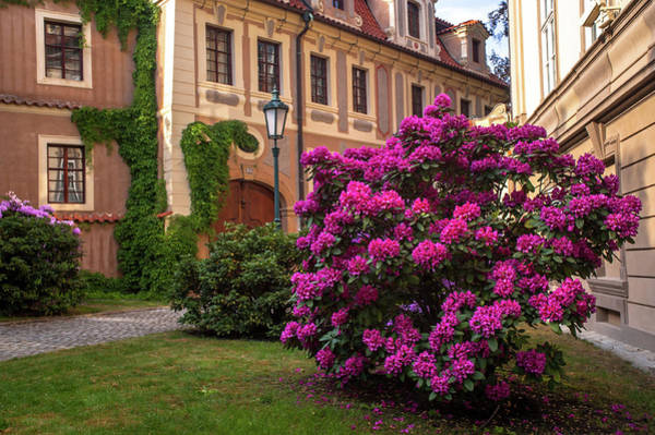 Photograph - Spring Blooms In Kolowrat Garden Prague 7 by Jenny Rainbow