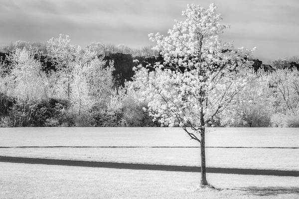 Photograph - Spring Blossom Bw by Susan Candelario