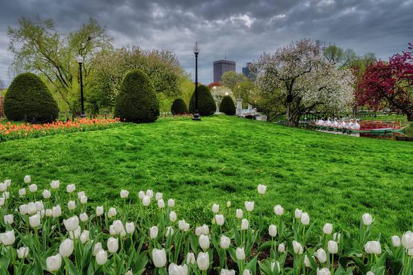 Photograph - Spring, Boston Public Garden by Michael Hubley