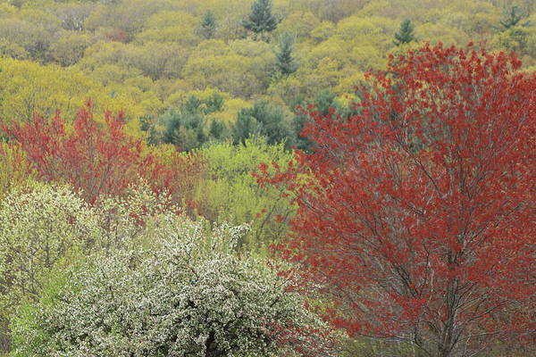 Wall Art - Photograph - Spring Colors by John Burk