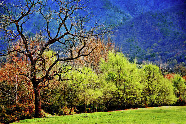 Photograph - Spring Colors, Shenandoah Valley by Bill Jonscher