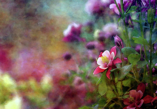 Photograph - Spring Columbine 6314 Idp_2 by Steven Ward