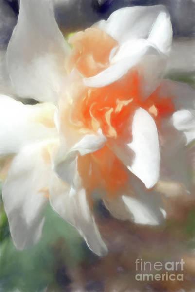 Digital Art - Spring Daffodil  by Amy Dundon