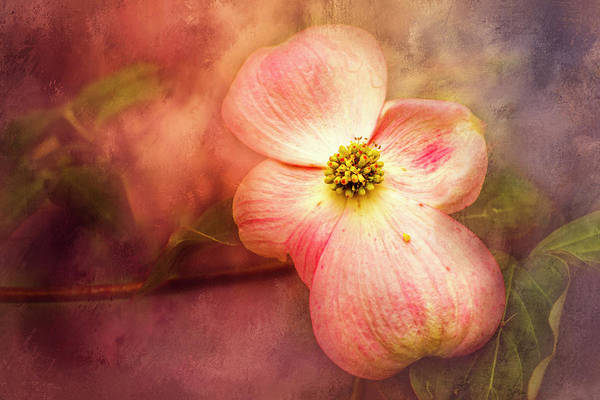 Wall Art - Photograph - Spring Dogwood by Jim Love