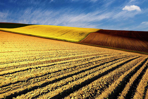 Photograph - Spring Fields by Evgeni Dinev
