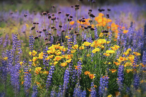 Photograph - Spring Flowers Along The Road  by Saija Lehtonen