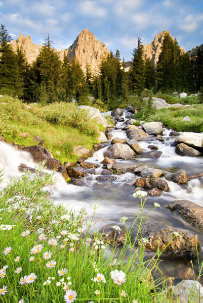 Vertical Landscape Photograph - Spring Flowers And Flowing Water Below by Josh Miller Photography