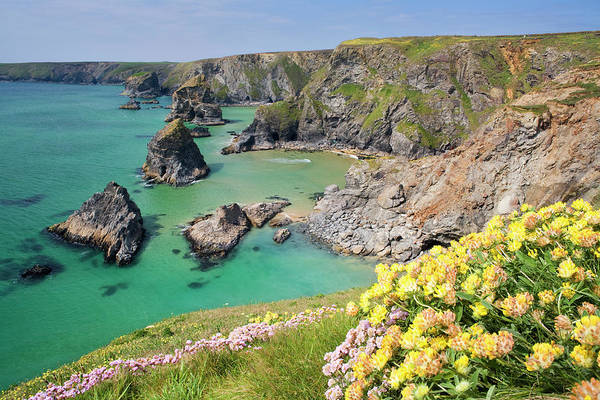 Headlands Photograph - Spring Flowers At The Bedruthan Steps by David Clapp