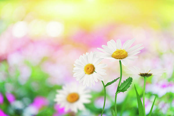 Photograph - Spring Flowers by Borchee