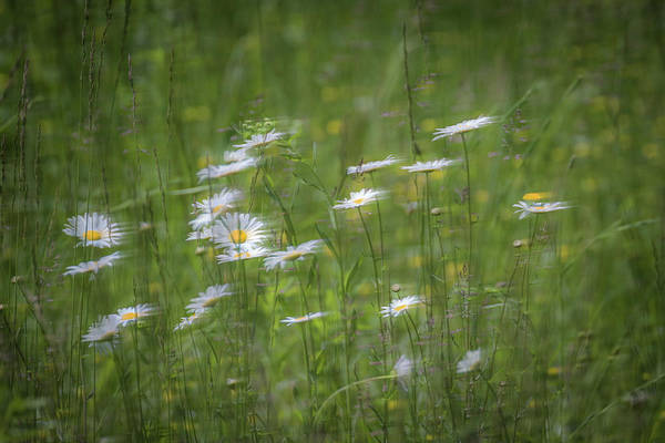 Photograph - Spring Flowers In The Wind by Allin Sorenson