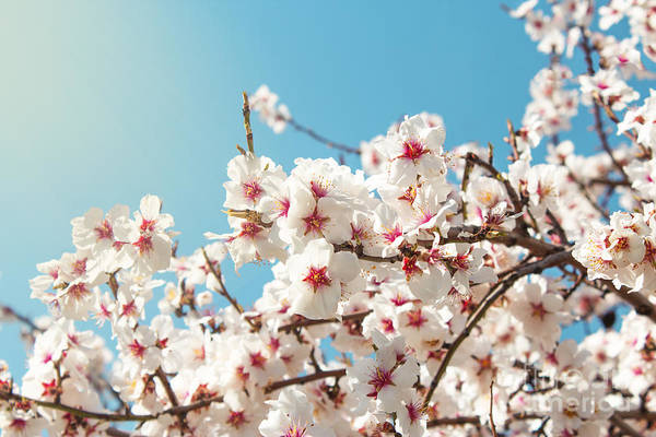Wall Art - Photograph - Spring Flowers. Spring Flowers by Aleksandar Grozdanovski