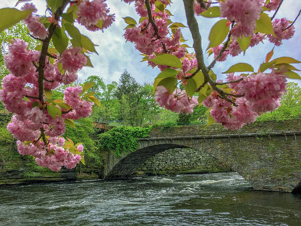 Photograph - Spring Garden On The Bridge  by Michael Hughes