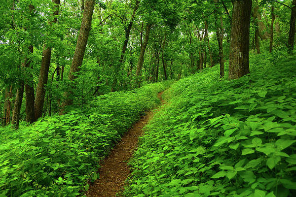 Photograph - Spring Green On Shenandoah's Section Of The Appalachian Trail by Raymond Salani III