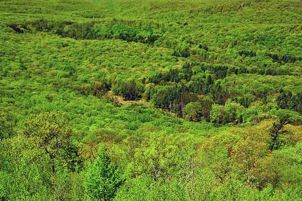 Photograph - Spring Green Trees by Raymond Salani III