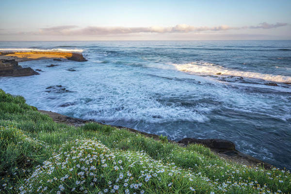 Photograph - Spring Has Sprung Up by Joseph S Giacalone