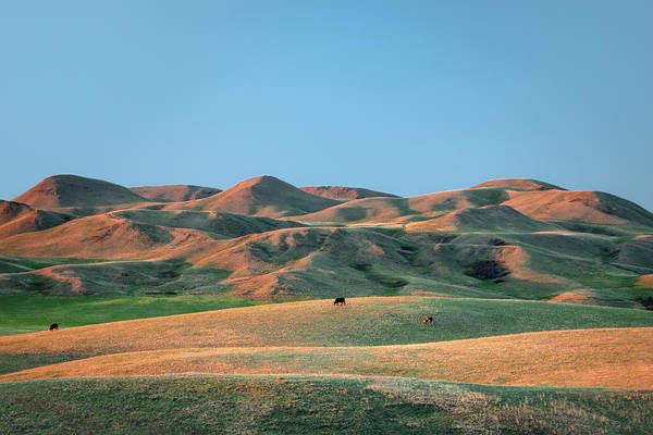 Foothills Wall Art - Photograph - Spring Hills by Todd Klassy