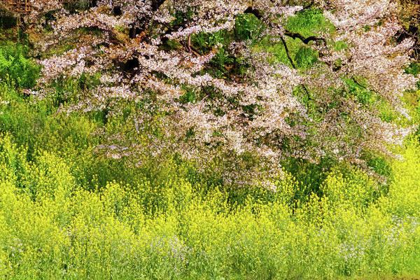 Photograph - Spring Impression by Marzena Grabczynska Lorenc