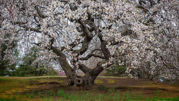 Wall Art - Photograph - Spring In Dc by Robert Fawcett
