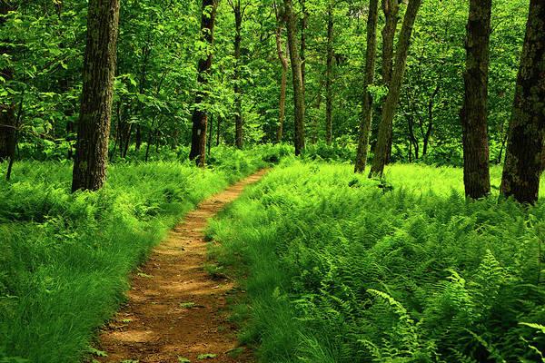 Photograph - Spring In Shenandoah Along The Appalachian Trail With Ferns by Raymond Salani III
