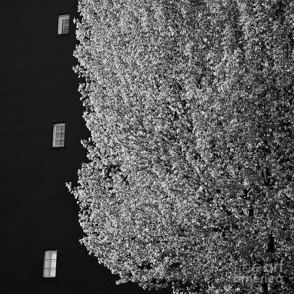 Photograph - Spring In The City by Patrick M Lynch