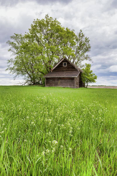 Wall Art - Photograph - Spring In The Country by Penny Meyers