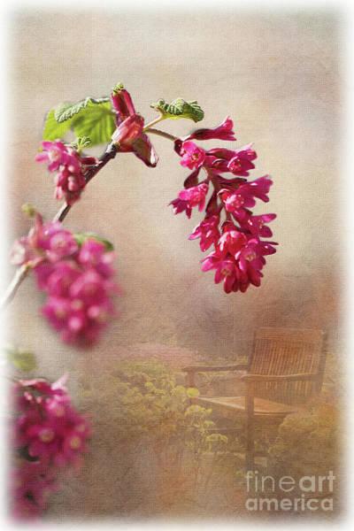 Digital Art - Spring In The Garden by Liz Alderdice