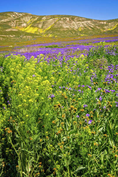 Photograph - Spring In The Temblors - Superbloom 2017 by Lynn Bauer