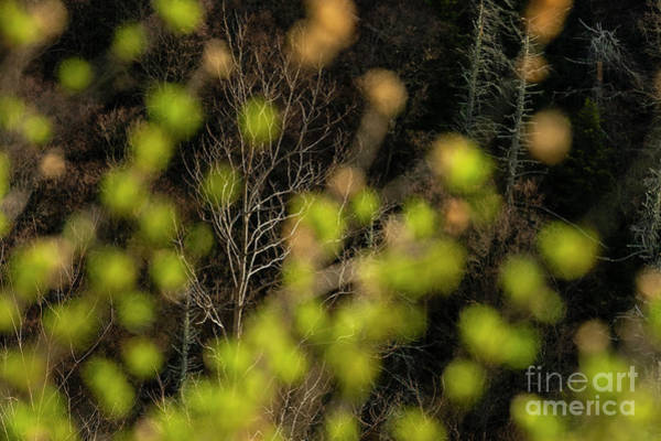 Wall Art - Photograph - Spring Is Coming by Chip Laughton