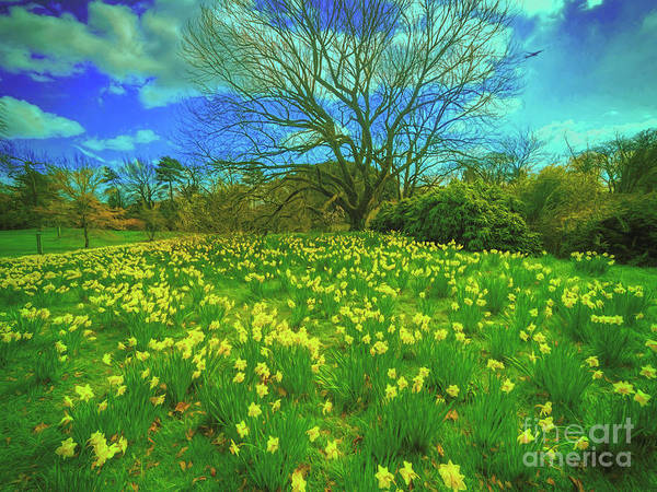 Wall Art - Photograph - Spring Is In The Air by Leigh Kemp