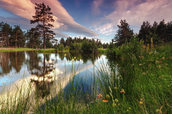 Photograph - Spring Lake by Evgeni Dinev