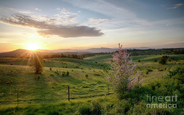 Wall Art - Photograph - Spring Meadow by Idaho Scenic Images Linda Lantzy
