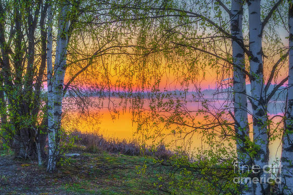 Wall Art - Photograph - Spring Morning At 5.43 by Veikko Suikkanen