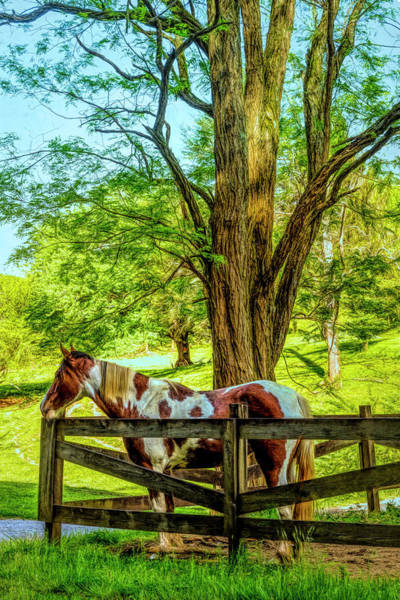Photograph - Spring Morning At The Fence by Debra and Dave Vanderlaan