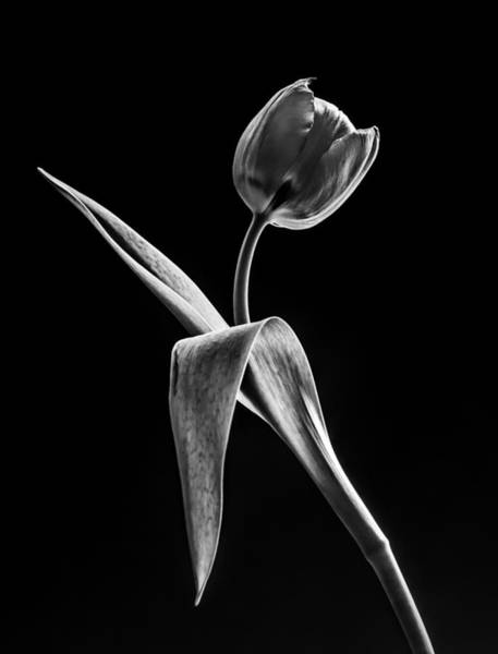 Greyscale Photograph - Spring Offering In Black And White  by Maggie Terlecki
