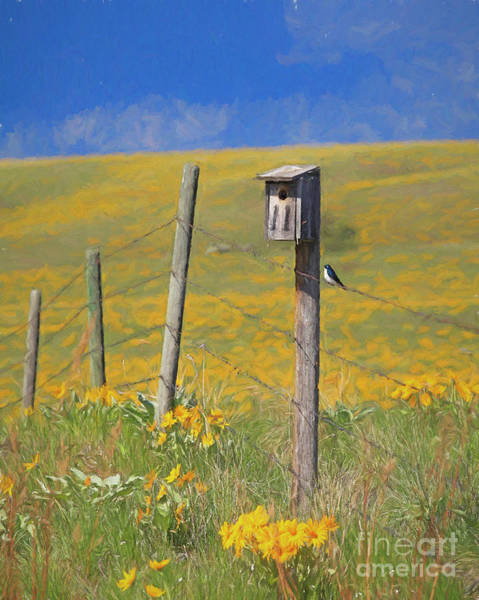 Photograph - Spring On The Grasslands by Darrel Giesbrecht