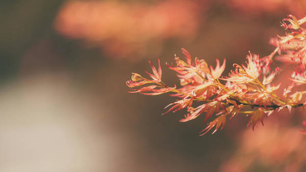 Photograph - Spring Or Fall by Dheeraj Mutha