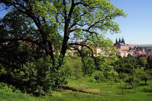 Photograph - Spring Petrin Hill With View Of St, Vitus Cathedral by Jenny Rainbow