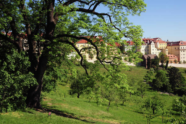 Photograph - Spring Petrin Park With View Of Hradcany Hilltop by Jenny Rainbow