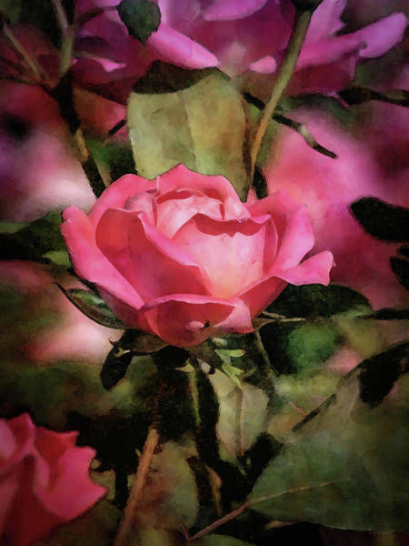 Photograph - Spring Pink 6130 Idp_2 by Steven Ward