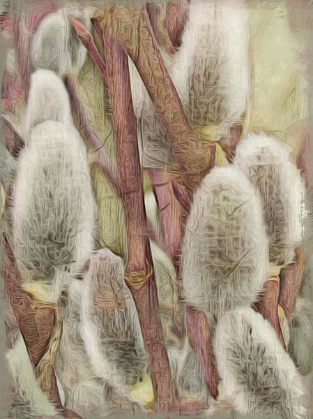 Photograph - Spring Pussy Willow by Jill Love