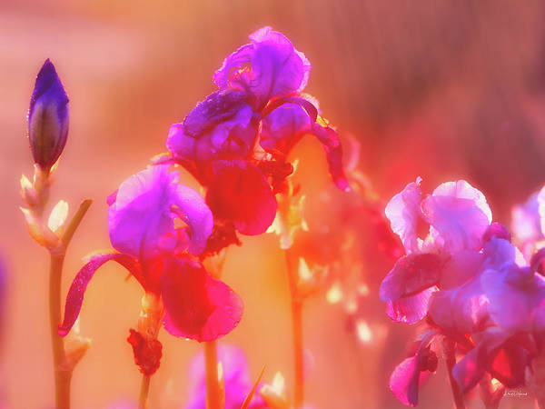 Photograph - Spring Rain by Leland D Howard