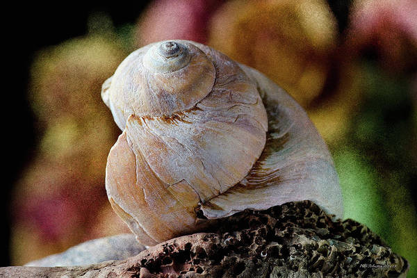 Photograph - Spring Shell by WB Johnston